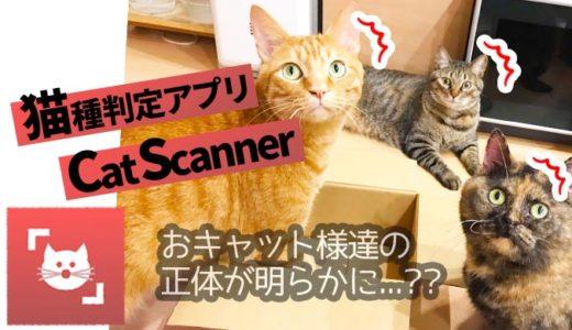 スマホアプリで「うちの猫」は猫なのか調べてみたら…