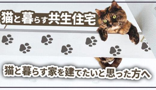 【失敗談有り】猫と暮らす家を建てたいと思ったら「○○すぎない」が大切