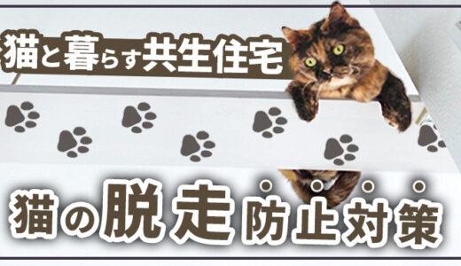 【秘策有!】猫との共生住宅建設経験から分かる脱走防止対策