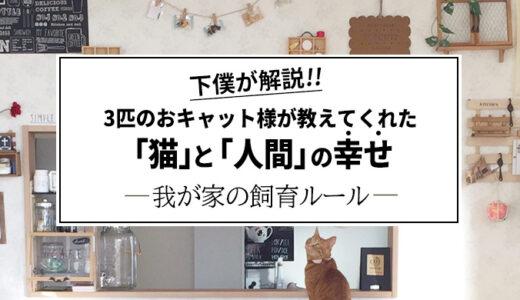 【多頭飼い実体験】3匹の猫たちが教えてくれた猫と人の幸せ